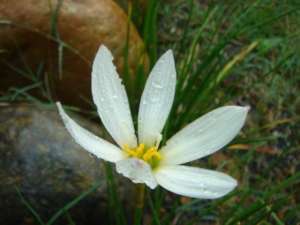 風雨中,依然挺立的小花